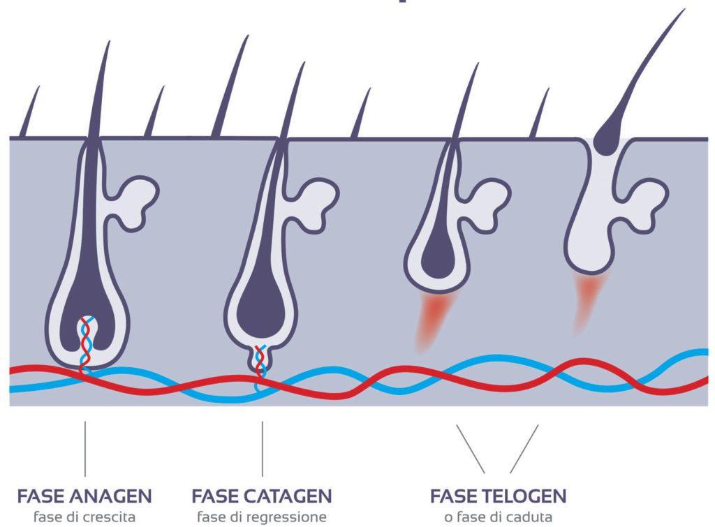 epilate-fase-crescita-pelo-epilazione-definitiva-2